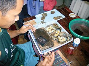 真珠の核入れ作業のデモンストレーション