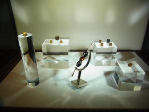 愛媛大学ミュージアムに展示されているヒメダイヤ