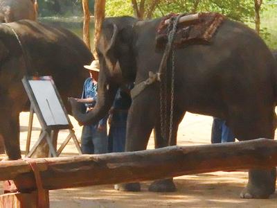 象が絵を描いているところ
