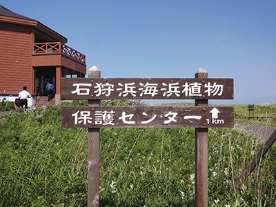 石狩浜海浜植物保護センター