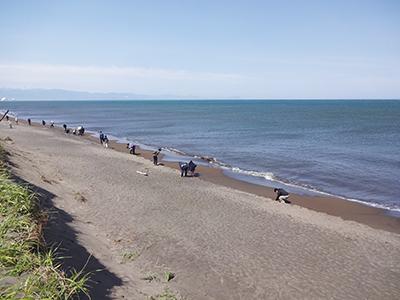 海岸でコハクを採取する参加者達