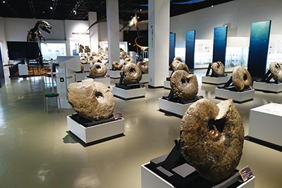 三笠市立博物館のアンモナイトの展示