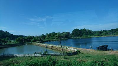 図12.車窓から見えたエビの養殖場