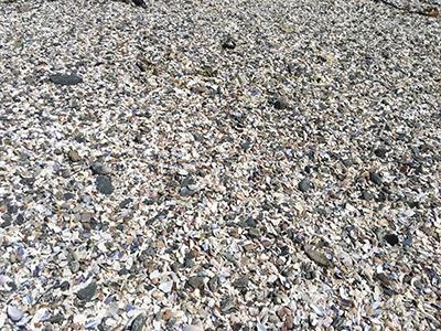 よく見ると貝殻で敷き詰められていることがわかる