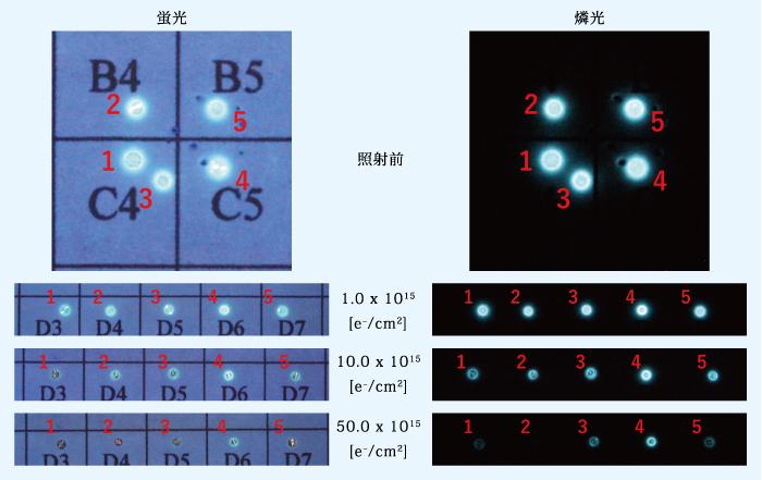 図1:グループAの蛍光及び燐光画像