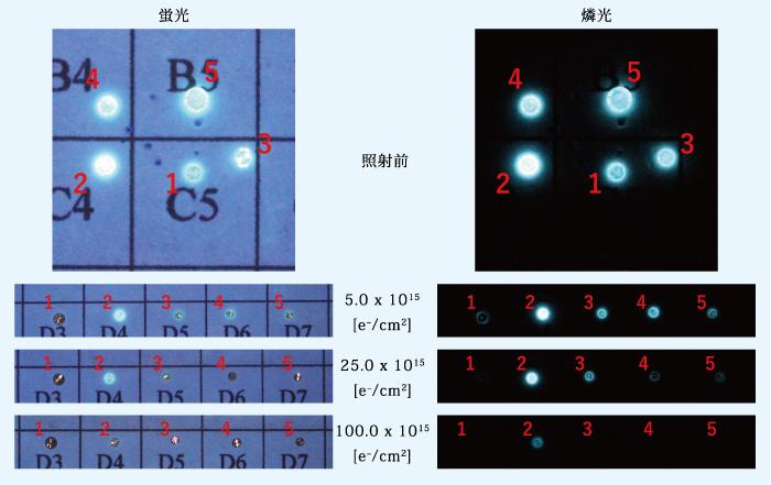 図2:グループBの蛍光及び燐光画像
