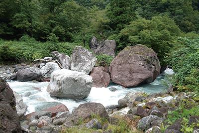 図 6:小滝川ヒスイ峡のヒスイの転石(白っぽい岩がヒスイ)