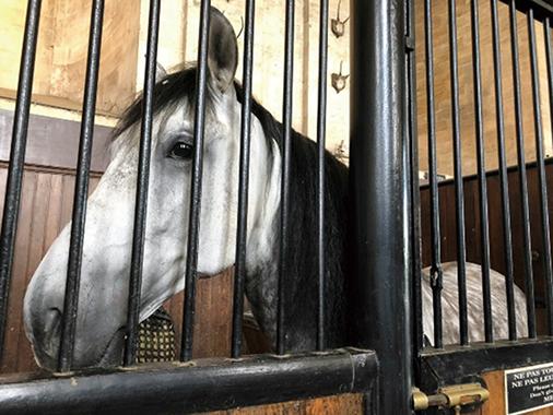 03-31馬房の馬RGB200-5-6